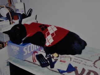 mimi sleeps w her leg in the box