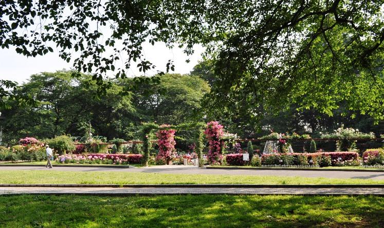 rosegarden panorama