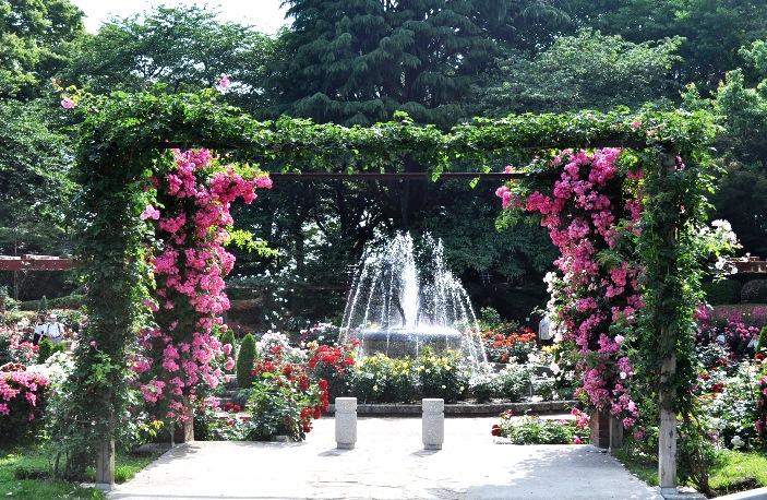 rosegarden arch 2