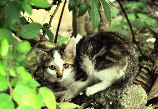 kitten s 3