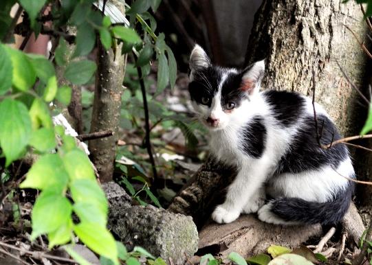 kitten s 2