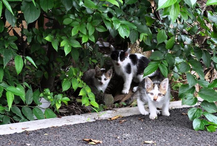 kitten t 46