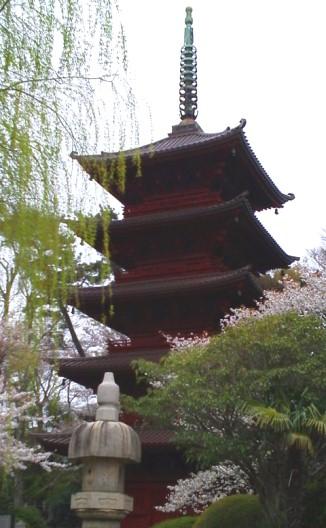 hokekyo w cherryblossom20120413
