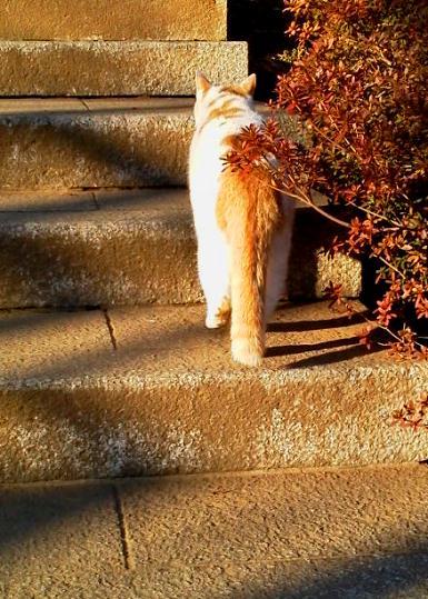 hokekyomaron201201-2.jpg