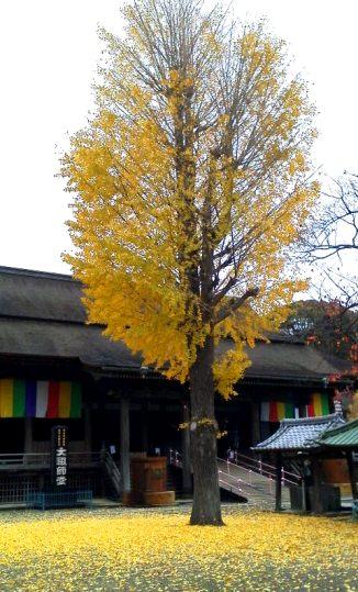 hokekyososhido20111202-5.jpg