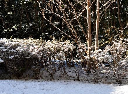 snowgarden201101.jpg