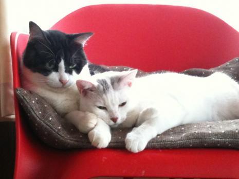 cat_kuro_mago_soine_convert_20100907233539.jpg