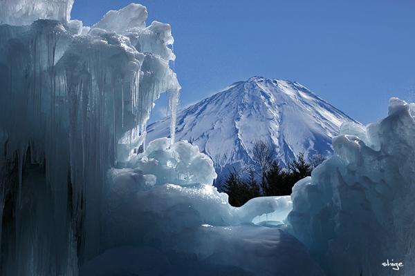 西湖「樹氷-43