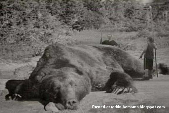 beruang_gergasi.jpg