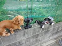 犬+DF-03