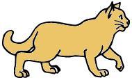 猫のタカシ