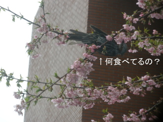 P3130810.jpg