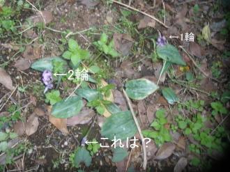 P3270851.jpg