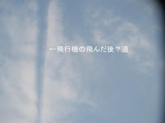 P5201027.jpg