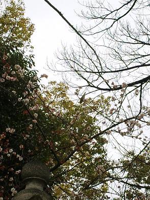 高牟神社の桜