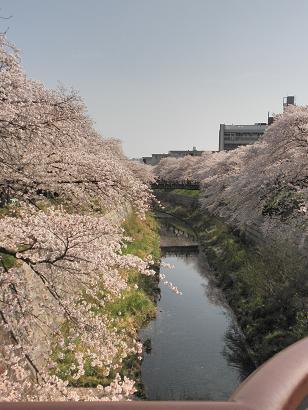 山崎川09