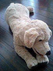 イケヤの犬