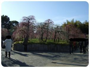 2011_0306福井遠征1421