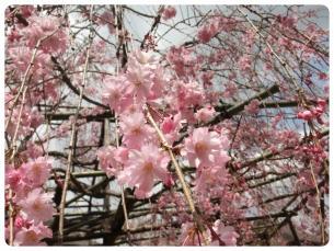 2011_0409福井遠征0759