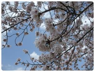 2011_0409福井遠征0697