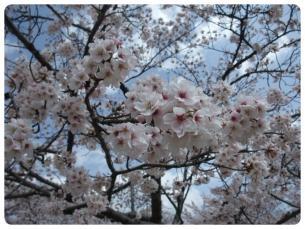 2011_0409福井遠征0696