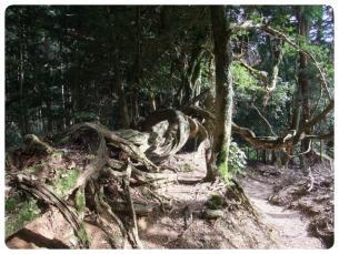 2011_0807福井遠征0665