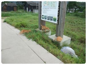 2011_0920福井遠征1008