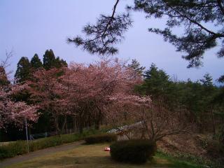 森林公園 025