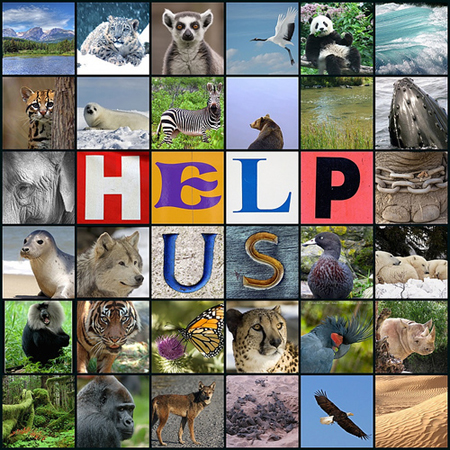 endangered animals collage