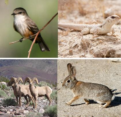 anza borrego Desert wild life