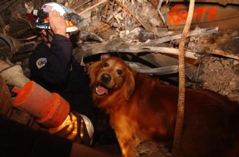 301-rescue dogs 911