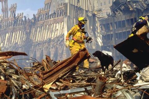 301-rescue dogs 911 2