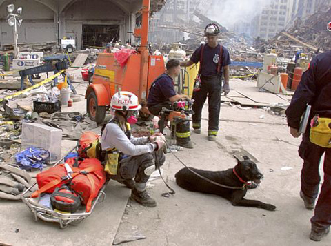 301-911rescue dog3