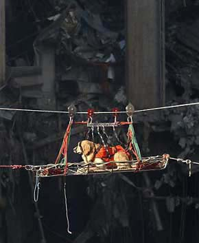 301-911wtc2_rescue-dog-transported