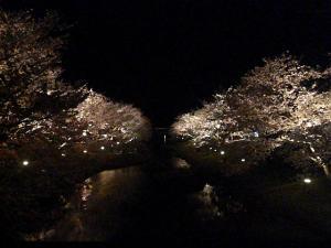 桜4.4 (2)