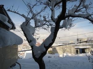 玄関の木の雪