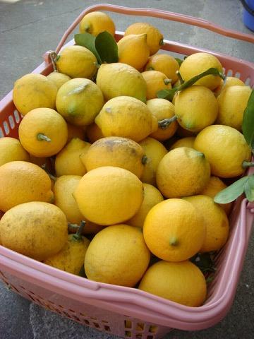 レモンバター2