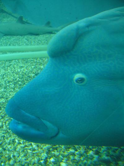 蟹&亀4_convert_20110101134446