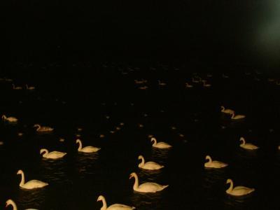 白鳥の湖_convert_20110721190338