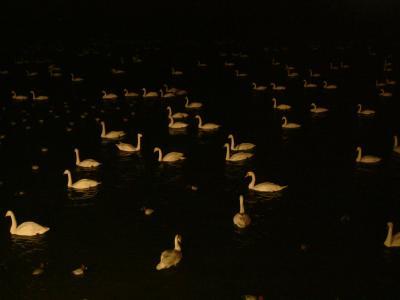 白鳥の湖2_convert_20110721191036
