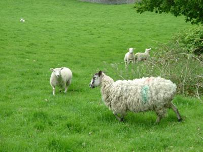 羊2_convert_20111103171728