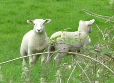 羊3JPG_convert_20111104003144