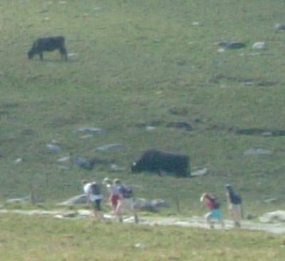 スノードンの牛2_convert_20111104202753