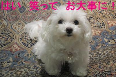 0803_convert_20110803173532.jpg