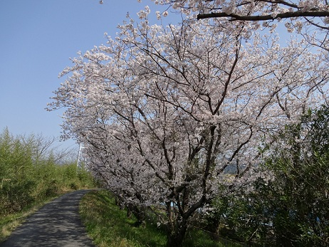 いい天気でしたわー、花粉が飛ぶ飛ぶ