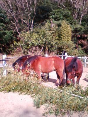 竹を食べルウ馬