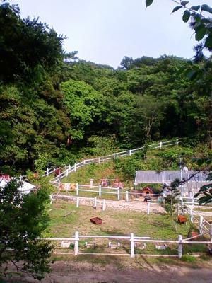 道からの牧場
