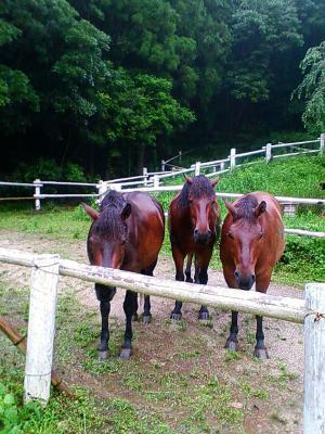雨の中の馬
