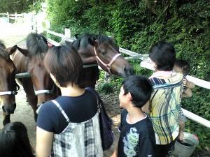 馬を見る人
