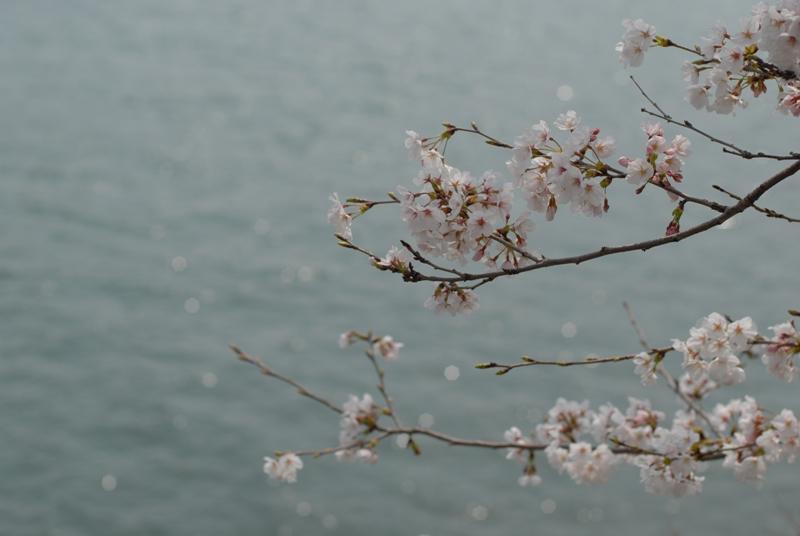 花見ふぉたりんぐ